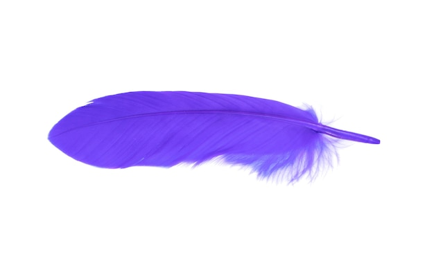 Фиолетовое перо, изолированные на белом фоне