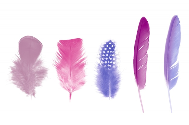 Violet feather on white
