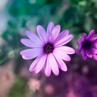 Violet flower in nature background