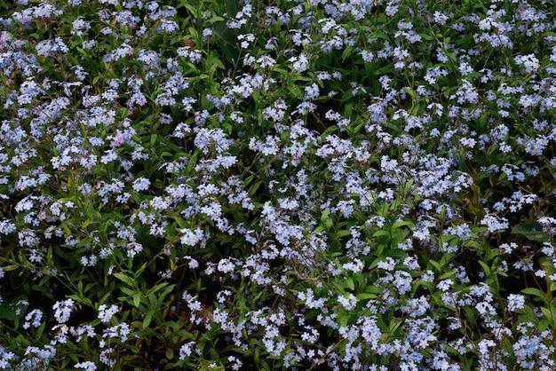 Фиолетовые цветы и поверхность зеленой травы