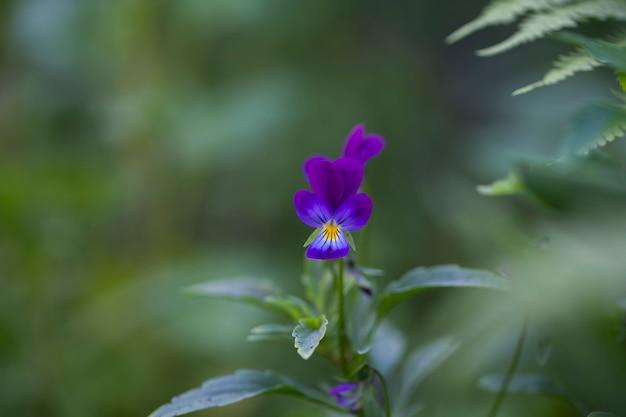 햇빛에 녹색 배경에 보라색 꽃과 잎