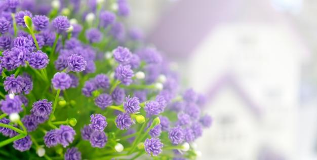 Violet flowers on blurred background.
