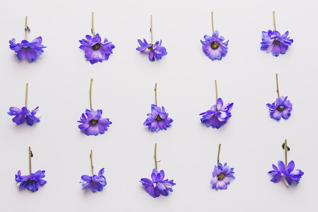 Composizione di fiori viola