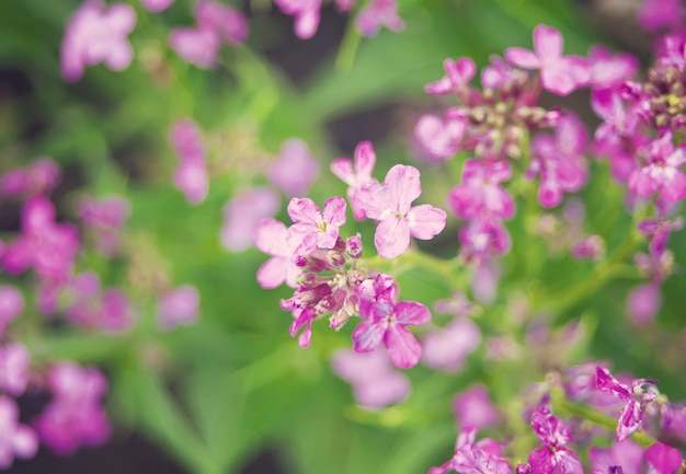 Violet flowers in a garden under sunlight in morning
