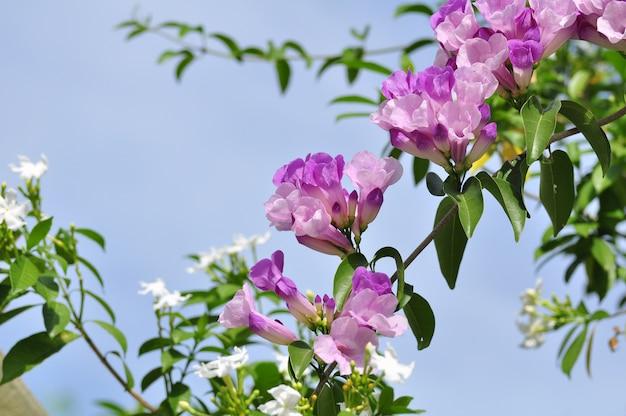 보라색 꽃 곤충과 꿀벌 빨 아