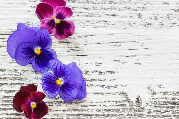 Violet flowers on old wooden table