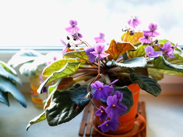 Фиолетовые цветы на подоконнике боке фоне hd