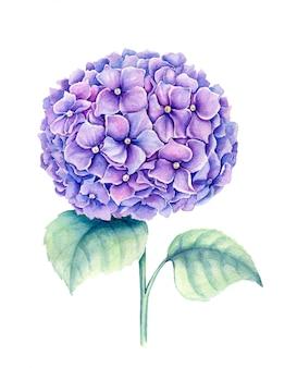 바이올렛 수국 꽃 빈티지 수채화 식물 그림