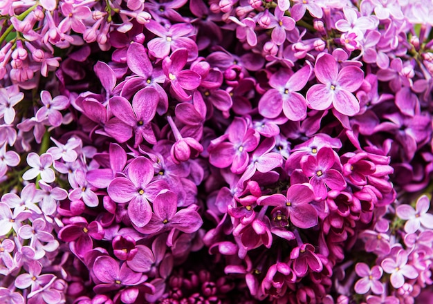 Violet lilac flower background or organic natural texture