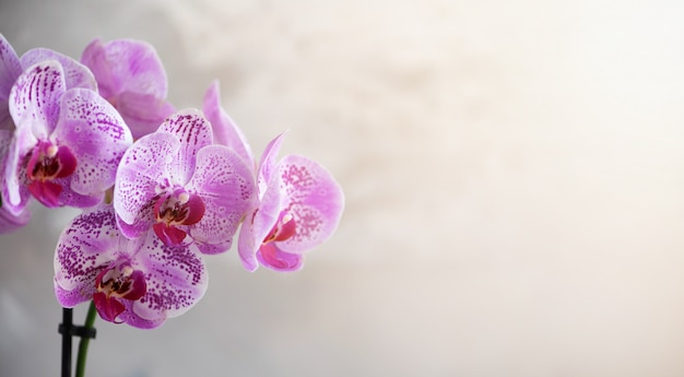Violet orchid on grey concrete background
