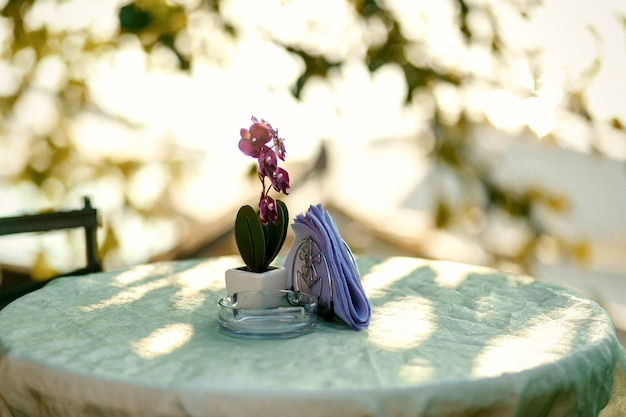 Violet orchid in little white flowerpot stands on the round table