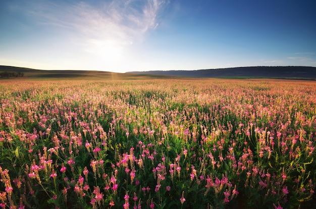 보라색 봄 초원입니다. 자연의 구성.