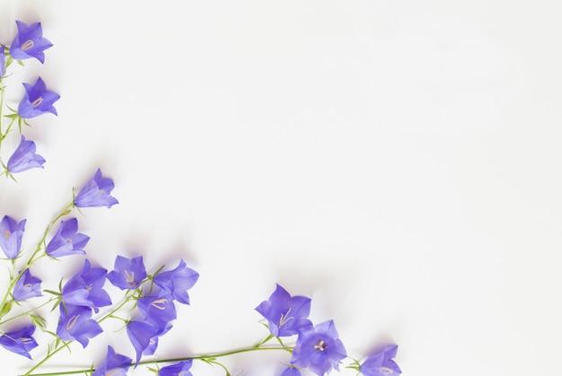 Violet wild flowers on white background