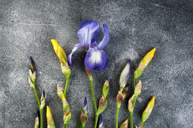 Violet and yellow irises on gray.