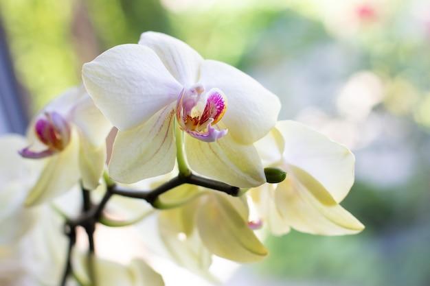 Пуктура фиолетово-желтых цветов орхидеи