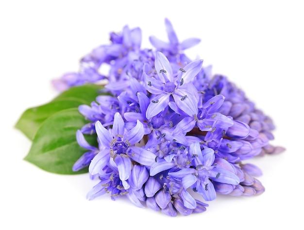 보라색 꽃 가까이