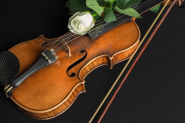 Violin and rose on black background.