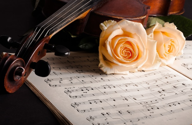 Violin with sheet music and white roses on black background