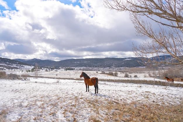Virgen de la vega snow village horse in teruel spain