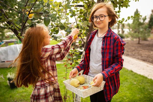 비타민. 행복한 형제와 자매가 함께 야외 정원에서 사과를 모으고 있습니다. 사랑, 가족, 생활 방식, 수확, 가을 개념. 쾌활하고 건강하고 사랑스럽습니다. 유기농 식품, 농업, 원예.