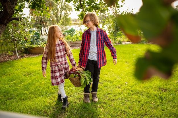 ビタミン。幸せな兄と妹が一緒に屋外の庭でリンゴを集めています。