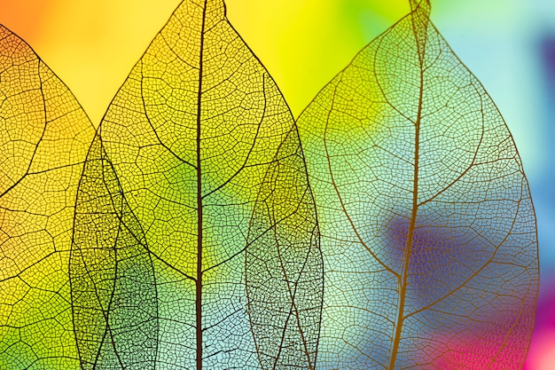 Vivid abstract green autumn leaves
