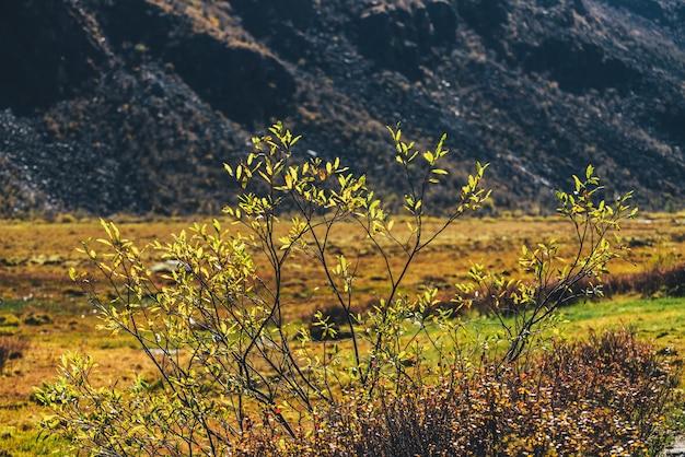 日差しの中で丘の中腹の背景に鮮やかな秋の黄金の葉。ゴールドの秋の色の野生の山の植物と美しい自然の背景。日光の下で色とりどりの黄色い葉への風光明媚な高山の景色。