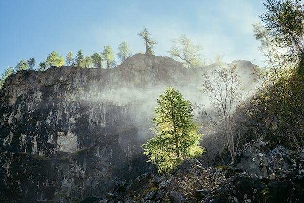 金色の日光の下で岩の上に木がある岩山の壁の背景に滝からの滴の水雲と鮮やかな秋の風景。金の日差しの中で岩の上の木の上の美しい水の雲