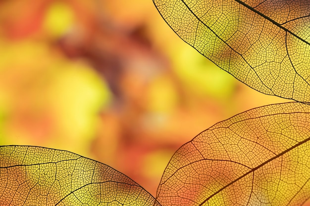 Vivid autumn leaves with copy space