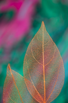 Vivid colored transparent autumn leaves