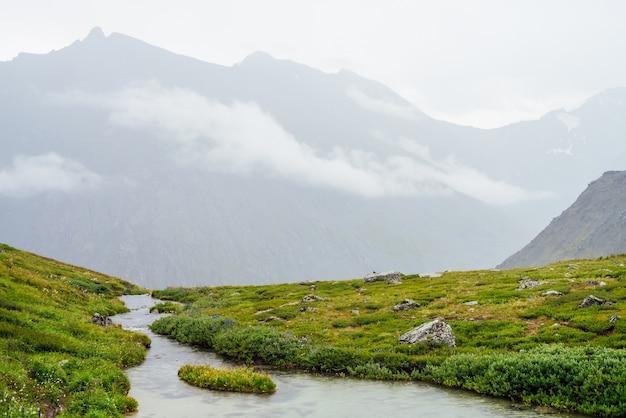 풍부한 식물과 낮은 구름 사이 산 사이 마운틴 크릭과 생생한 녹색 고산 풍경. 마운틴 브룩, 야생 식물과 안개 속에서 바위가있는 다채로운 풍경. 고원의 아름다운 자연.