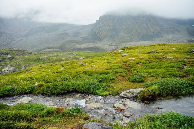 풍부한 초목 가운데 마운틴 크릭이있는 생생한 녹색 고산 풍경