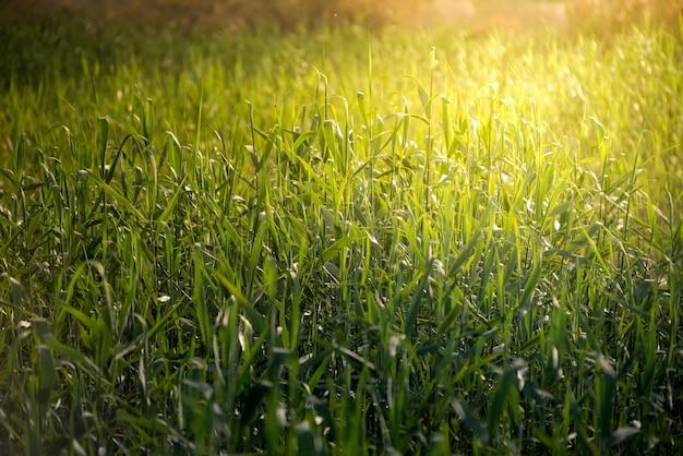 Ярко-зеленая трава с бликами солнечного света