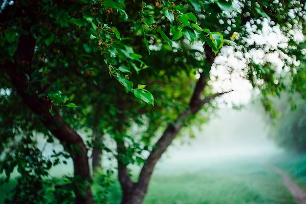 ボケ背景の木の鮮やかな葉。コピースペースのある日光の豊かな緑。