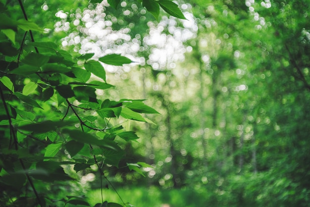 Vivid leaves of trees on bokeh background. rich greenery in sunlight with copy space