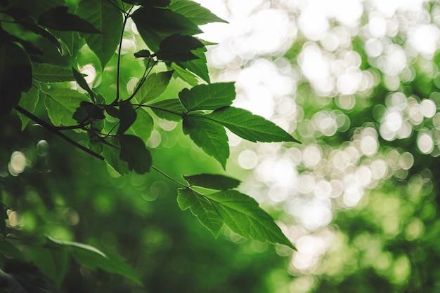 Vivid leaves of trees on bokeh background.