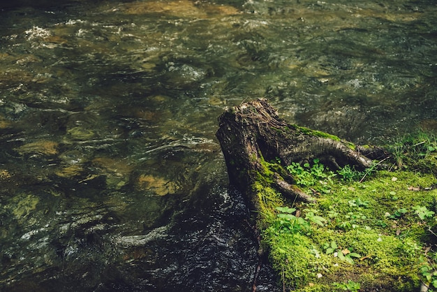 Vivid nature background with tree stump on water edge of small river in vintage tones. scenic landscape with green transparent mountain river with stony bottom. clear water in beautiful mountain brook