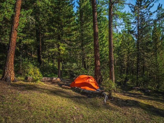 夏の森の針葉樹の下にある鮮やかなオレンジ色のテント。丘の中腹にある針葉樹林の木の下にテントを張る。山の明るいオレンジ色のテントのクローズアップ。秋の風光明媚な山の風景。