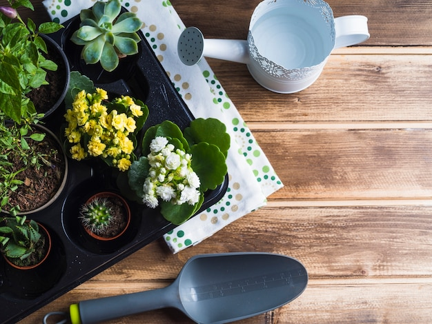 Vivid small potted plant in plastic crate on wooden table
