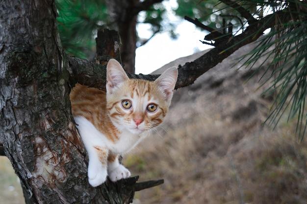 木の上の赤い子猫。カード、ポスター、vlakat、デザイン。
