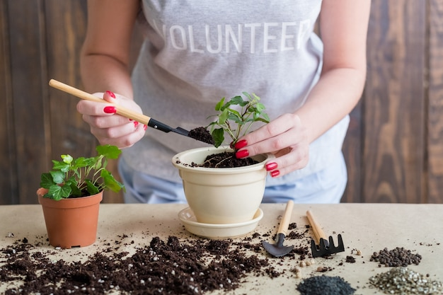 자원 봉사 원예 라이프 스타일. 모종 발아. 식물 이식에 종사하는 여성.