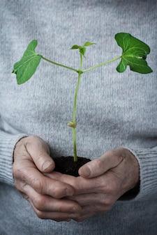 Volunteer women holding plant growing