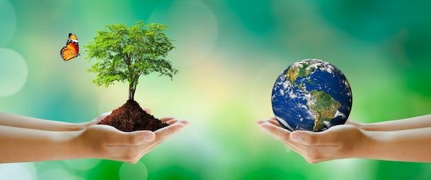 緑のぼやけた背景の上に蝶と地球と成長している木を持っているボランティアの手。世界環境とグリーンコンセプト。 nasaによって提供された要素。