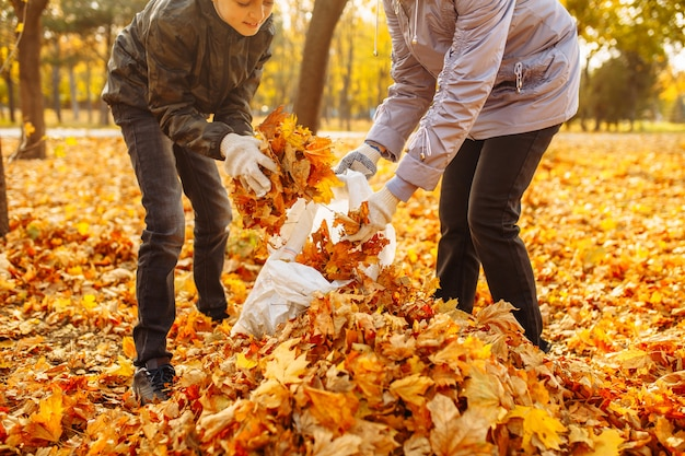 落ち葉から公園を掃除するボランティア。秋の風景。人々は葉の山をかき集めています。環境保護活動家。