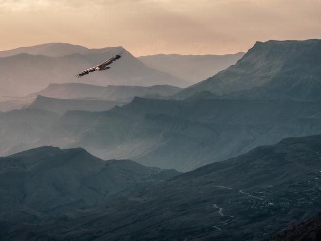 ハゲタカは夕方の山の谷を飛び越えます。