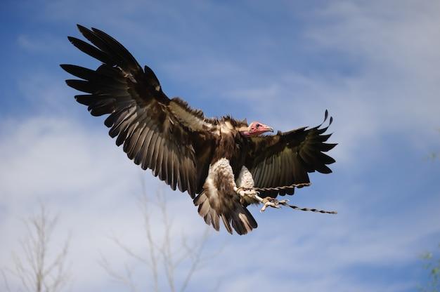 푸른 하늘에 비행 독수리