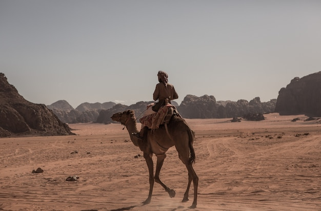 Wadi rum desert landscape in jordan. travel concept.camel