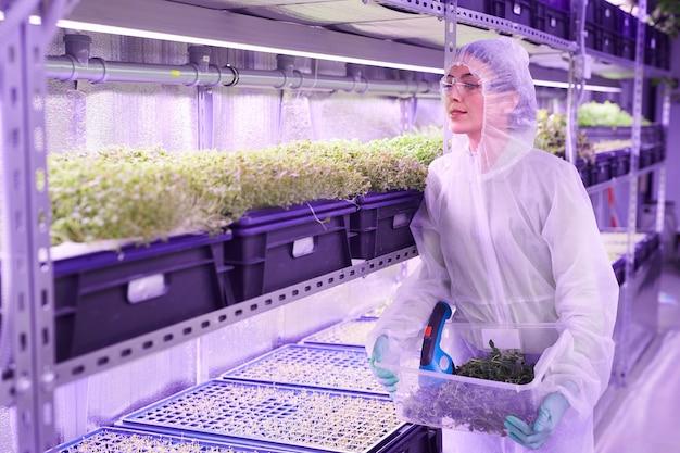 青い光に照らされた植物保育園の温室で働く女性の農業技術者の腰の肖像画、コピースペース