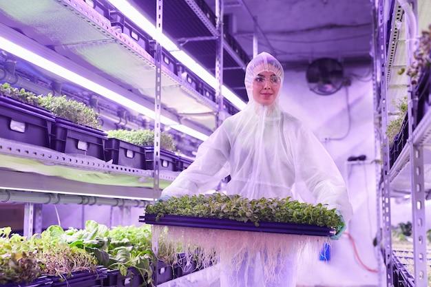 青い光に照らされた保育園の温室で緑の芽、コピースペースでトレイを保持している女性労働者の肖像画を腰に当てる