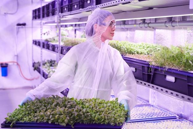 青い光に照らされた保育園の温室に立っている間、緑の芽でトレイを保持している女性労働者の肖像画を腰に、コピースペース